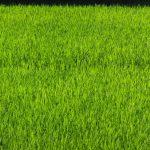 となりの芝生は緑だと感じることもある