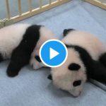 パンダが大好きな人にパンダに寄せてる手袋があります!